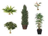 Planten, bloemen en bomen
